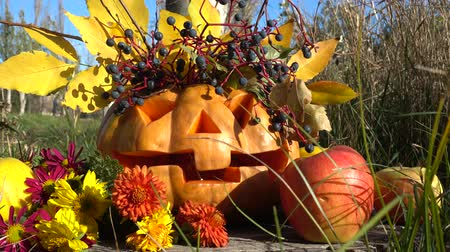 pigwa : Spooky halloween pumpkin. The monster sits on a tree stub. Shooting in October. Wideo