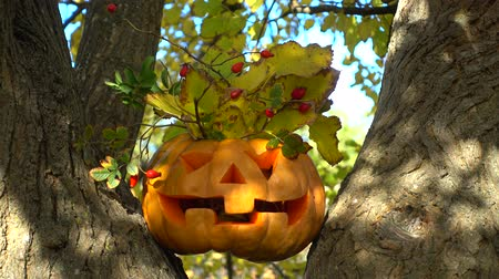 jack olantern : Spooky halloween pumpkin. Shooting on a tree in the wood. Shooting in October.