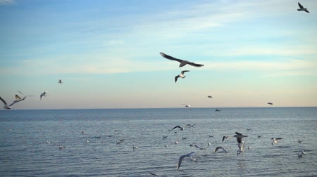 pairar : Seagulls over the sea. Slow motion.