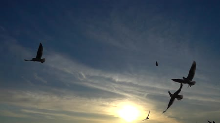 aydınlatmalı : Seagulls over the sea. Slow motion.