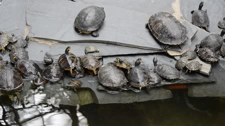 salt marsh : Turtles at the Atocha station, Madrid. Stock Footage