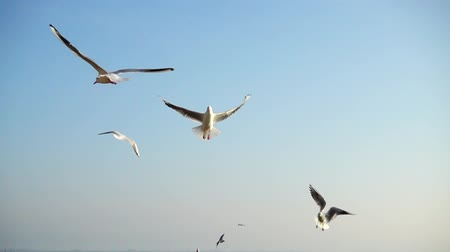 influenzy : Seagulls fly over the sea. Slow Motion.