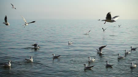 pairar : Seagulls and sea.