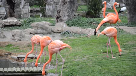 flamingi : Flamingo in a zoo.