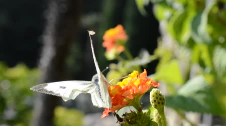 temyiz : Butterfly on flowers