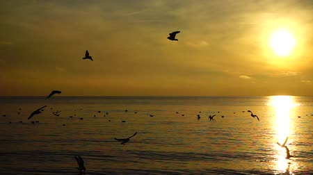 influenzy : Seagulls over the sea. Slow motion.