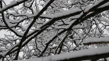 wood glade : Trees in snow Stock Footage