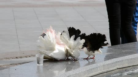 yandan görünüş : Pigeons on the fountain. Stok Video