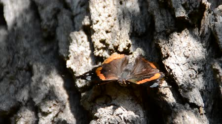 nápadný : Butterfly on tree bark.