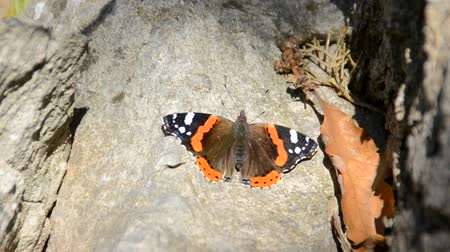 monarca : The butterfly sits on a tree trunk.