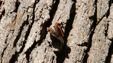 opvallend : The butterfly sits on a tree trunk.