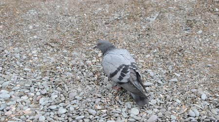 passarinho : Pigeon on the beach.