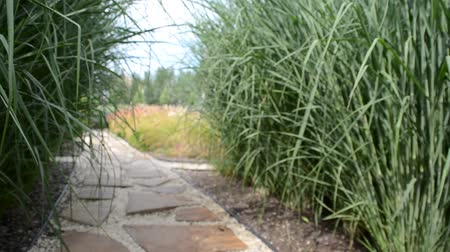 garden route : Stone walkway winding in garden