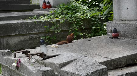 wiewiórka : Squirrel on a grave. Lviv, Ukraine. Lychakovsky cemetery (polish. Cmentarz ?? yczakowski) ??? the historical and memorial memorial estate (since 1991), one of the oldest cemeteries of Ukraine.