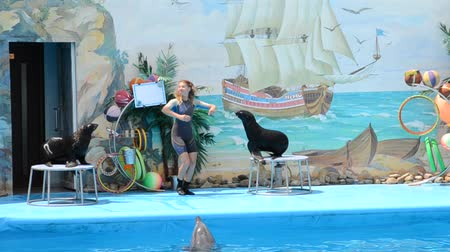 fish ball : Performance of seals in a dolphinarium.