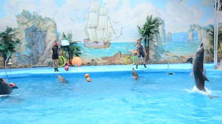 fish ball : A trainer and dolphins in a show in a delphinarium. Stock Footage
