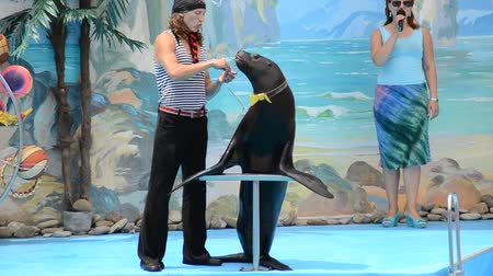 foka : Beautiful sea lion. Singing