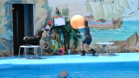 buzağı : Performance of seals in a dolphinarium.