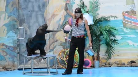bochechudo : Performance of seals in a dolphinarium.