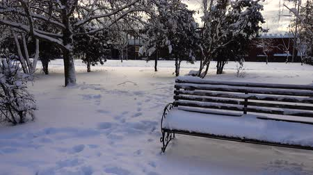 benches : Winter day. Shooting in the park. Stock Footage