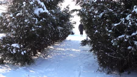 snowbound : Winter day. Shooting in the park. Stock Footage