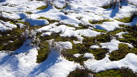 mossy : Snow on a meadow, shooting in the winter. Shooting in January.