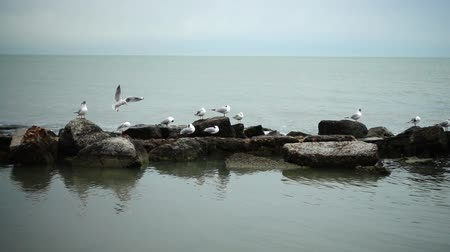 influenzy : Seagulls and stones. Slow motion.