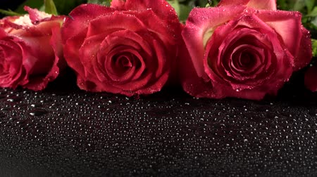 pétalas : Red roses on a black background.