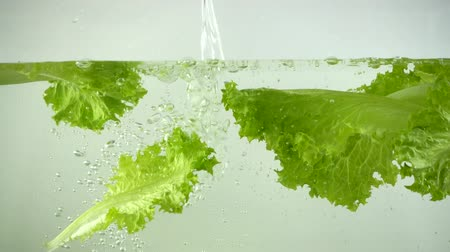 frondoso : Lettuce leaves fall in water. Slow motion.