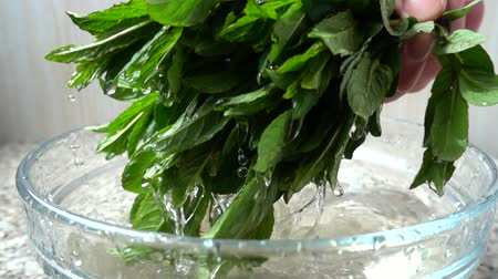 pepermunt : The cook gets mint leaves from water. Slow motion. Stockvideo