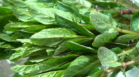 fodormenta : Falling leaves of mint in a bowl with water. Slow motion. Stock mozgókép