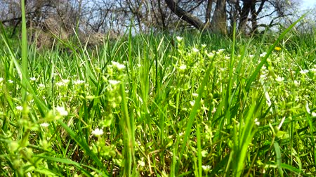 bujný : Spring flowers in a grass.
