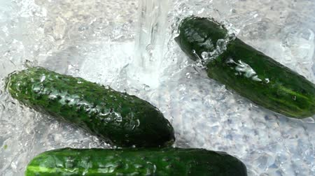 consumir : Washing of cucumbers. Slow motion. Stock Footage
