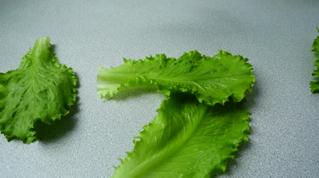 栄養満点の : The falling lettuce leaves on a kitchen table. Slow motion.