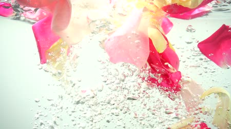 slomo : Petals of roses fall in water. Background. Slow motion.