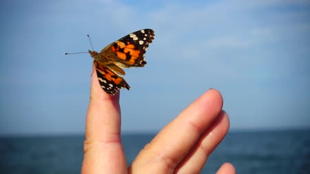 monarca : Butterfly on the sea Stock Footage