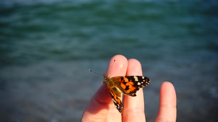 tropical insects : Butterfly on the sea Stock Footage