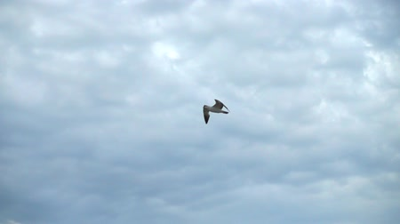 soar : Flight of the seagull in the sky over the sea. Slow motion.