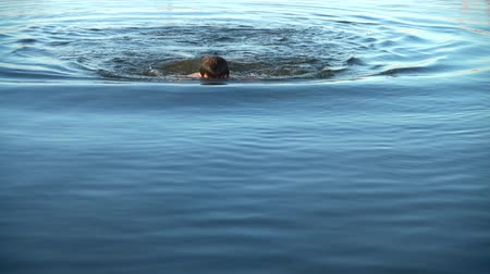 nadador : Swim in the summer evening. Slow motion. Stock Footage