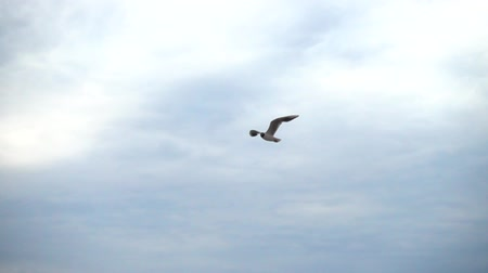 クイック : Flight of the seagull in the sky over the sea. Slow motion.