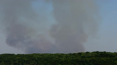 bush fire : The fire over the wood. Smoke shooting. Stock Footage