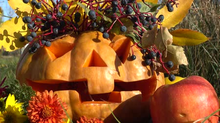 koçan : Spooky halloween pumpkin. The monster sits on a tree stub. Stok Video