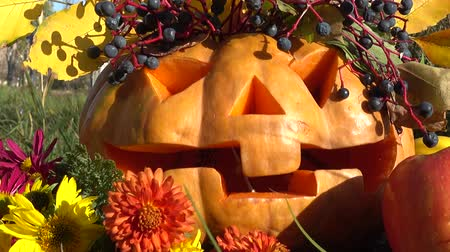 pigwa : Spooky halloween pumpkin. The monster sits on a tree stub. Wideo