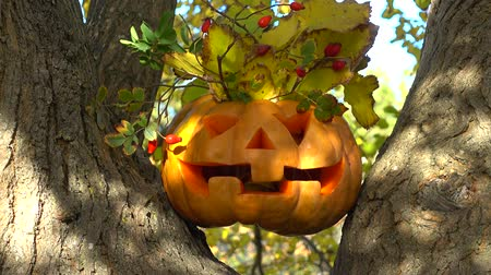 jack olantern : Spooky halloween pumpkin. Shooting on a tree in the wood.