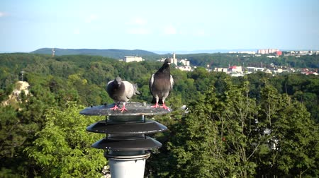 sokak lâmbası direği : Pigeons sit on a lantern in the background of the city. Slow motion.