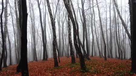 fallen leaves : Fog in the forest. Shooting in the fall.