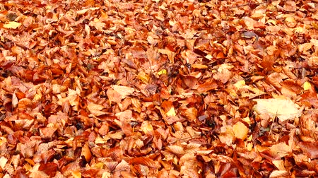 novembre : Autumn leaves in the woods.