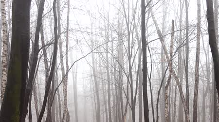 faia : Fog in the forest. Shooting in the fall.
