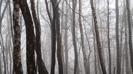 de faia : Fog in the forest. Shooting in the fall.