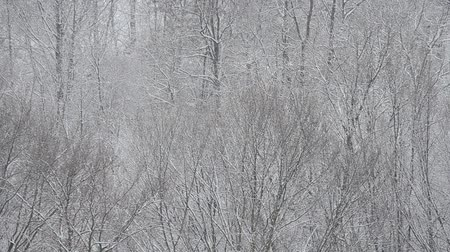 śnieżka : A shot of a blizzard on a background of trees.